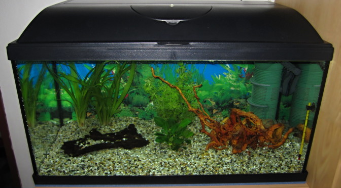 Nitrifikace v nově založeném akváriu