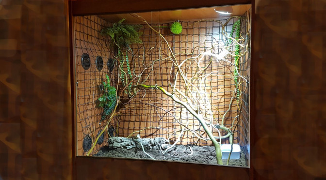 Terárium chameleon